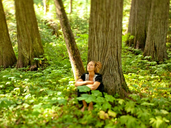 Waldbaden, Wald-Gesundheitstraining